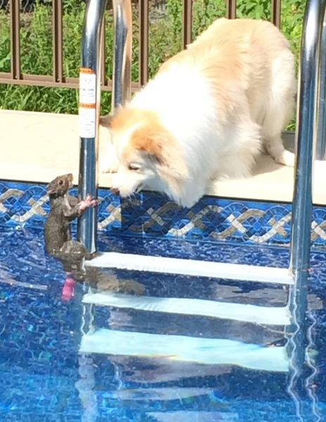 This Week In Squirrels June 30 2014 Cats And Squirrels And Other Important Things