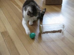 Food puzzles are a great way to provide enrichment for your cat!