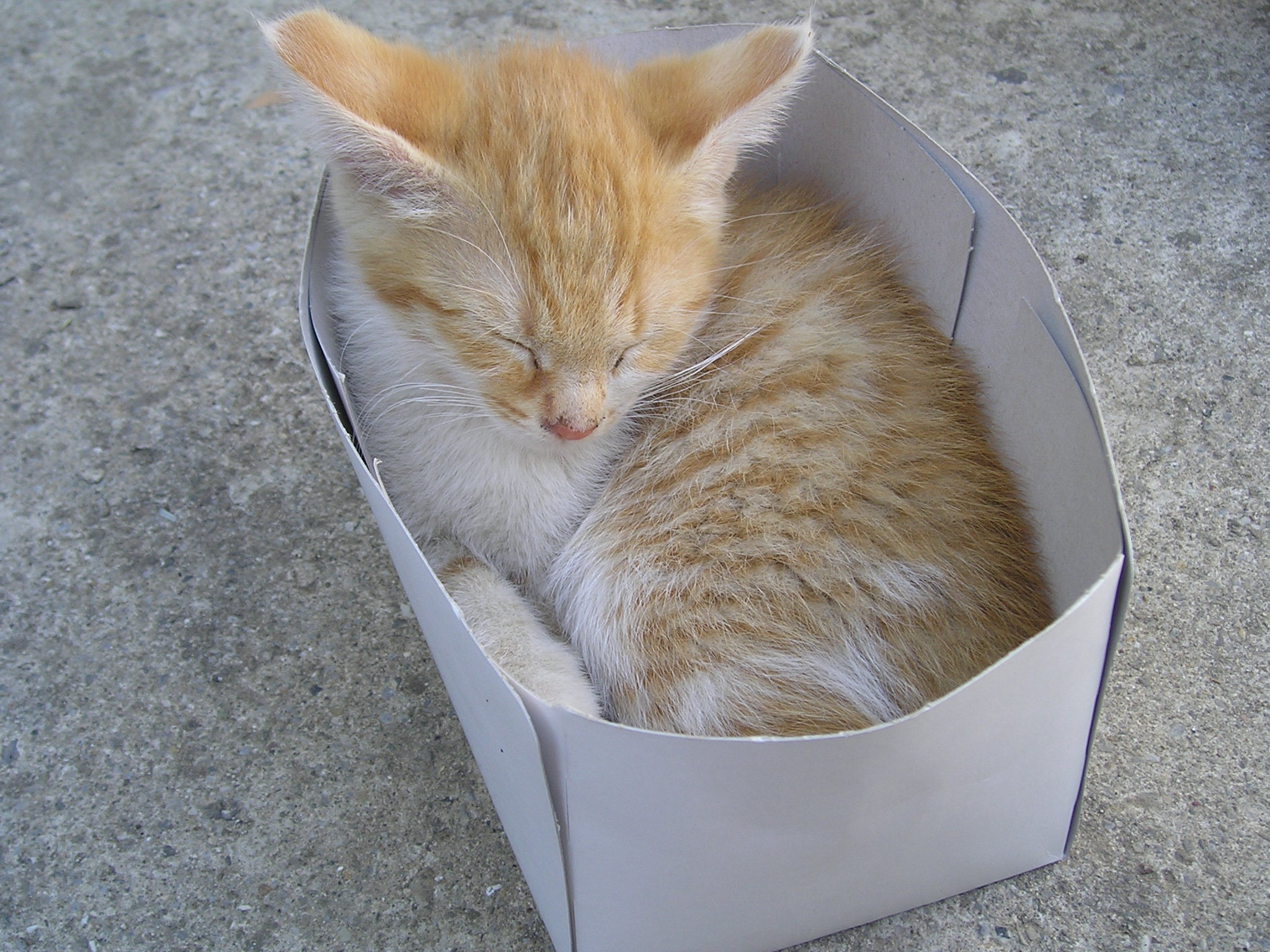 cats don t just love boxes cats may need boxes cats and squirrels and other important things. Black Bedroom Furniture Sets. Home Design Ideas