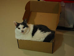 Science still hasn't totally solved the mystery of why cats love boxes so much. Photo by Walter Smith via Creative Commons License.