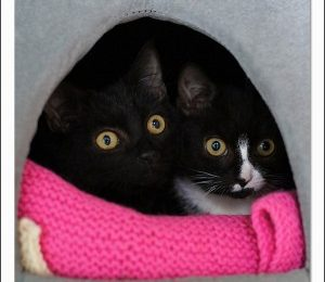 Can we help confined cats be less stressed?