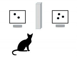 How many mice? A new study explores numeracy in our feline friends.