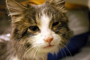 Give them space, keep them in place: Keeping cats healthy in shelters