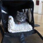 Training cats to love their carriers: Science shows it helps!