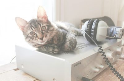 Can music make cats less stressed out?