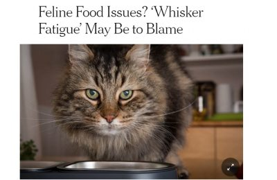 Whisker stress: Science asks if it is real