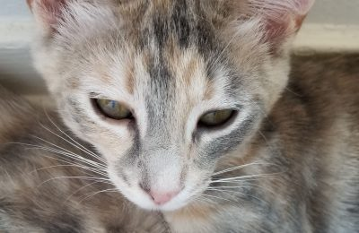 "Should you ""slow blink"" at your cat?"