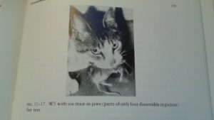 From a book a love, Paul Leyhausen's Cat Behavior: a cat with six mice.