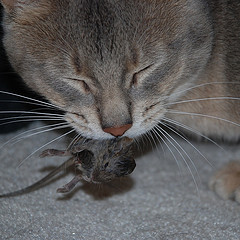 Natural Born Killers: Cats show individual differences for favorite prey types