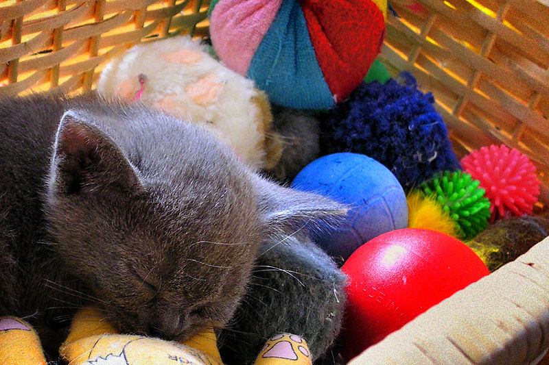 Cats can get bored of the same toys. Photo via Wikimedia Commons