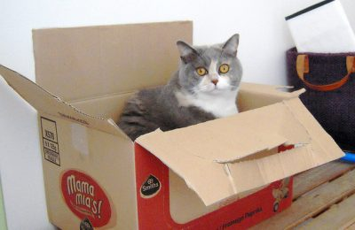 Cats don't just love boxes, cats may NEED boxes