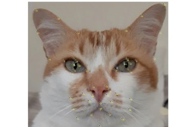 Cat facial expressions are affected by breed: Why there are implications for cat welfare